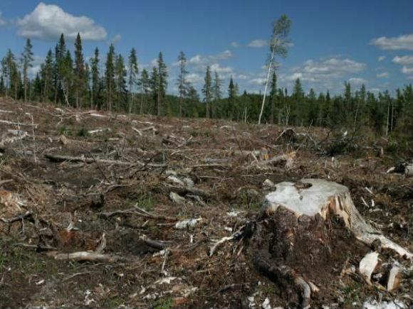 Emil Boc o critică pe Lucia Varga şi susţine că Guvernul PDL nu a avizat defrişări ilegale de păduri