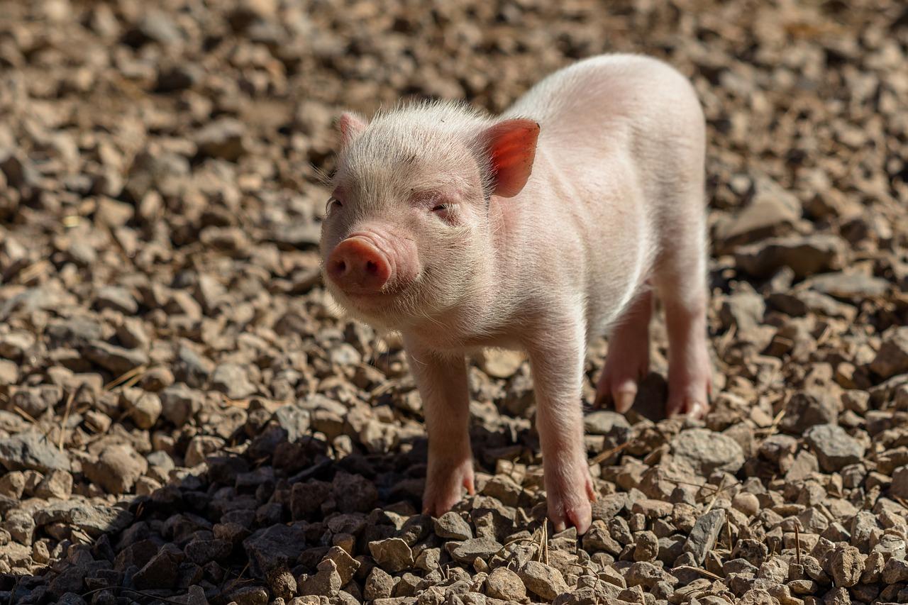 porc-eoficial